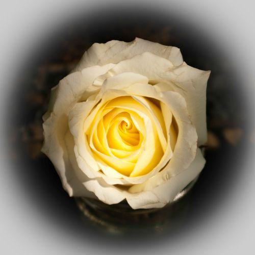 Sun_Rose_100717-15