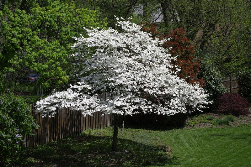 Easter_Tree_110424_Blog