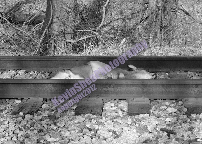 Victim_On_Rails_120201 CSX