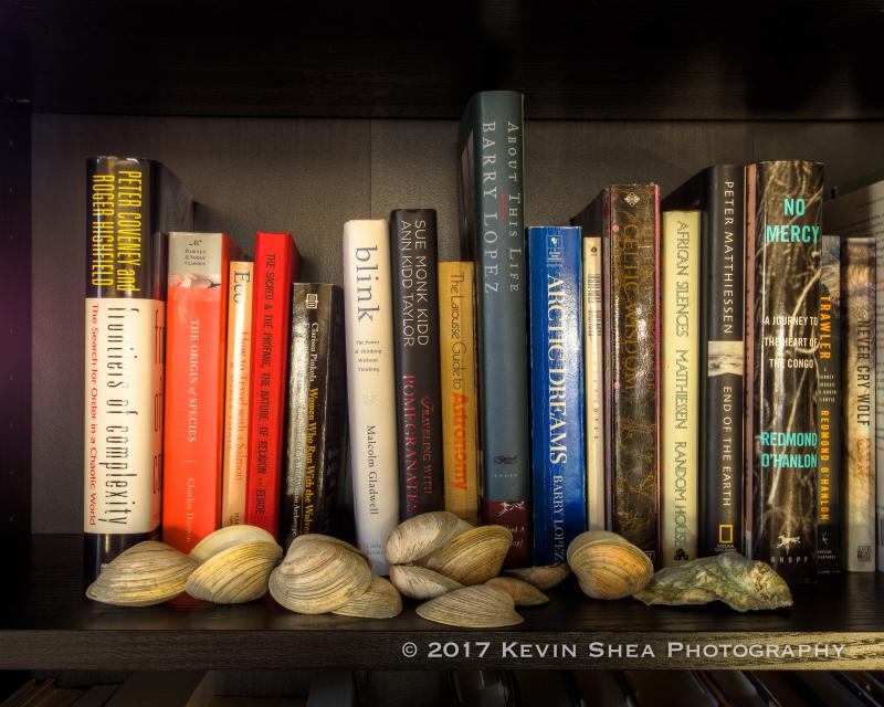 170225-Study--Bookshel(l)f