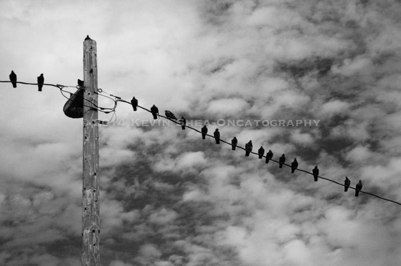 141202-Bird-Stories-01
